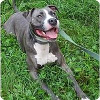 Adopt A Pet :: Tucker - Dallas, PA