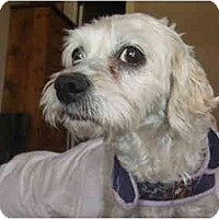 Adopt A Pet :: Julia - Chimayo, NM