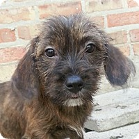 Adopt A Pet :: Jilly*ADOPTED!* - Chicago, IL