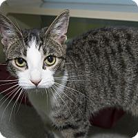 Adopt A Pet :: Phoebe Jane - New York, NY