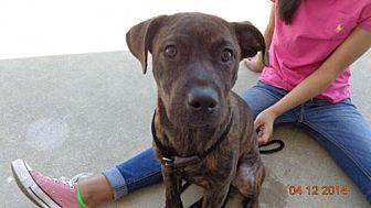 Hound (Unknown Type)/Labrador Retriever Mix Dog for adoption in Loganville, Georgia - BROOKLET