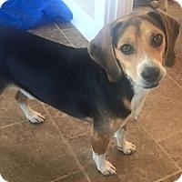 Adopt A Pet :: Jericho - Russellville, KY