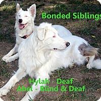 Adopt A Pet :: Abel & Hylah - Post Falls, ID