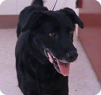 Labrador Retriever Mix Dog for adoption in McDonough, Georgia - Thelma