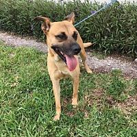 Adopt A Pet :: Sheila - Maquoketa, IA