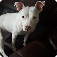 Adopt A Pet :: Tilly - Ft. Myers, FL