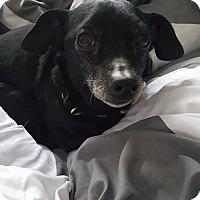 Adopt A Pet :: Miri - Tenafly, NJ