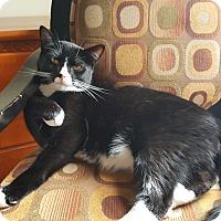 Adopt A Pet :: George (COURTESY POST) - Smithfield, NC