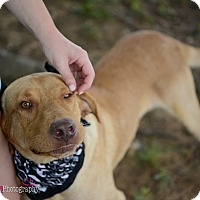 Adopt A Pet :: Jacob - Muldrow, OK