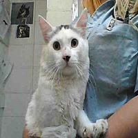 Adopt A Pet :: HAPPY - Albuquerque, NM