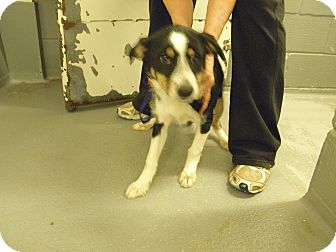 Collie/Terrier (Unknown Type, Small) Mix Dog for adoption in Granbury, Texas - Tater