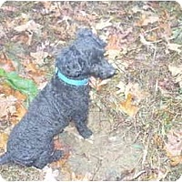 Adopt A Pet :: Cubbie - Albany, NY