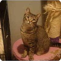 Adopt A Pet :: Luke--PETSMART - Muncie, IN