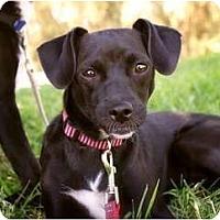 Adopt A Pet :: Daisy - Fresno, CA