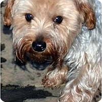 Adopt A Pet :: Reilly - Greensboro, NC