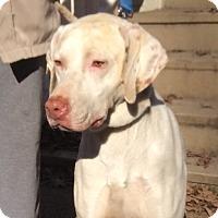 Adopt A Pet :: Winston - Hendersonville, TN