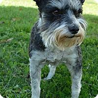 Adopt A Pet :: Emma - Staunton, VA