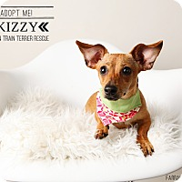 Adopt A Pet :: Kizzy-Pending Adoption - Omaha, NE