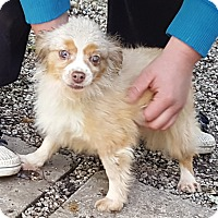 Adopt A Pet :: Pecious - ADOPTION PENDING!! - Antioch, IL