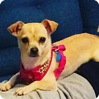 Adopt A Pet :: Diva! - New York, NY