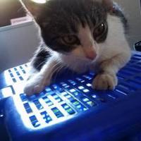 Adopt A Pet :: Gladys - Fresno CA, CA