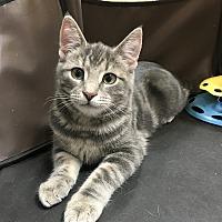 Adopt A Pet :: June - Carlisle, PA