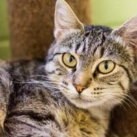 Adopt A Pet :: Juanita Jordan - Merriam, KS