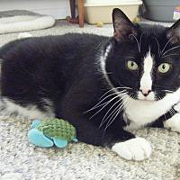 Adopt A Pet :: Champ - Kensington, MD