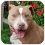 Photo 3 - American Pit Bull Terrier Mix Dog for adoption in Berkeley, California - Nino