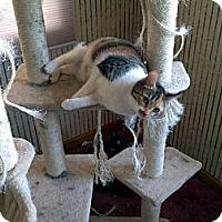Adopt A Pet :: Erin - Saint Albans, WV