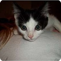 Adopt A Pet :: Forest - Acme, PA