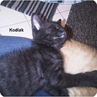 Adopt A Pet :: Kodiak - Jacksonville, FL