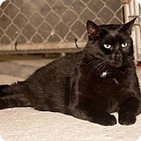 Adopt A Pet :: Smudge - Southbury, CT