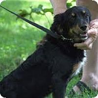Adopt A Pet :: Willow - Staunton, VA
