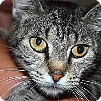 Adopt A Pet :: Angel - Xenia, OH