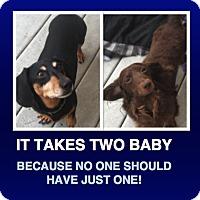 Adopt A Pet :: Charlie & Lola - Morrisville, PA