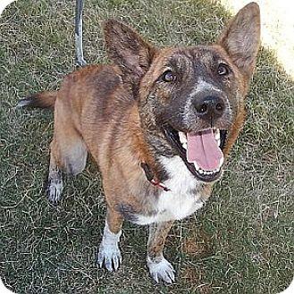 Shepherd (Unknown Type) Mix Dog for adoption in Athens, Georgia - Stella