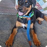 Adopt A Pet :: Rumor - Sacramento, CA