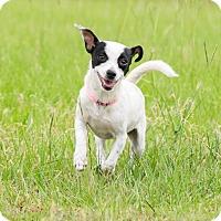 Adopt A Pet :: A - RITA - Seattle, WA