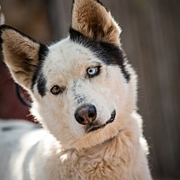 Adopt A Pet :: Paisley - Cedar Crest, NM