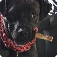 Adopt A Pet :: Cherry - Sylvan Lake, MI
