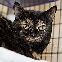 Adopt A Pet :: Minie - Burlingame, CA