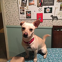 Adopt A Pet :: Captain Louie - Sherman, CT