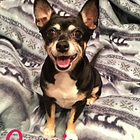 Adopt A Pet :: Queenie - Milton, GA