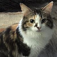 Adopt A Pet :: Grace - Tulsa, OK