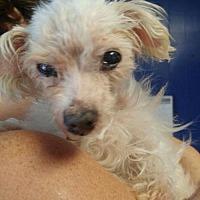 Adopt A Pet :: Nana - New York, NY