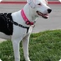 Adopt A Pet :: Nahla - justin, TX