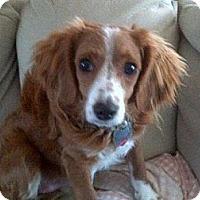 Adopt A Pet :: Flearoy - Mt Gretna, PA