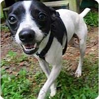 Adopt A Pet :: Andy - Suffolk, VA