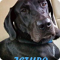 Adopt A Pet :: Jethro - Largo, FL